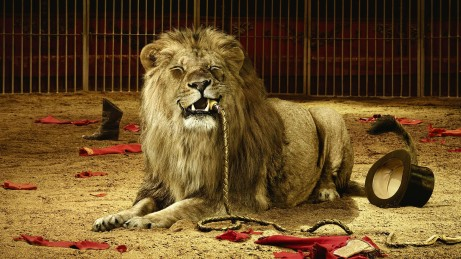 animals_whips_lions_circus_desktop_1920x1080_hd-wallpaper-1228647