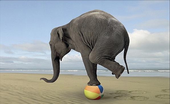 life-balance-elefante