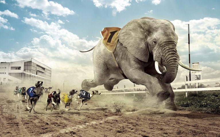 155556_dogs-vs-elephant-racing-manipulation-hd-wallpaper_1600x1000