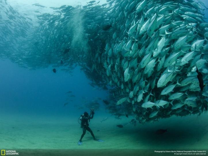 enorme-banco-de-peces
