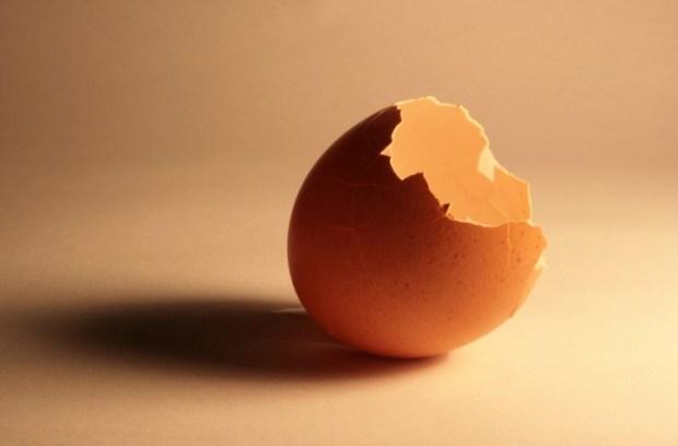 broken-eggshell-1320153-1279x852.jpg